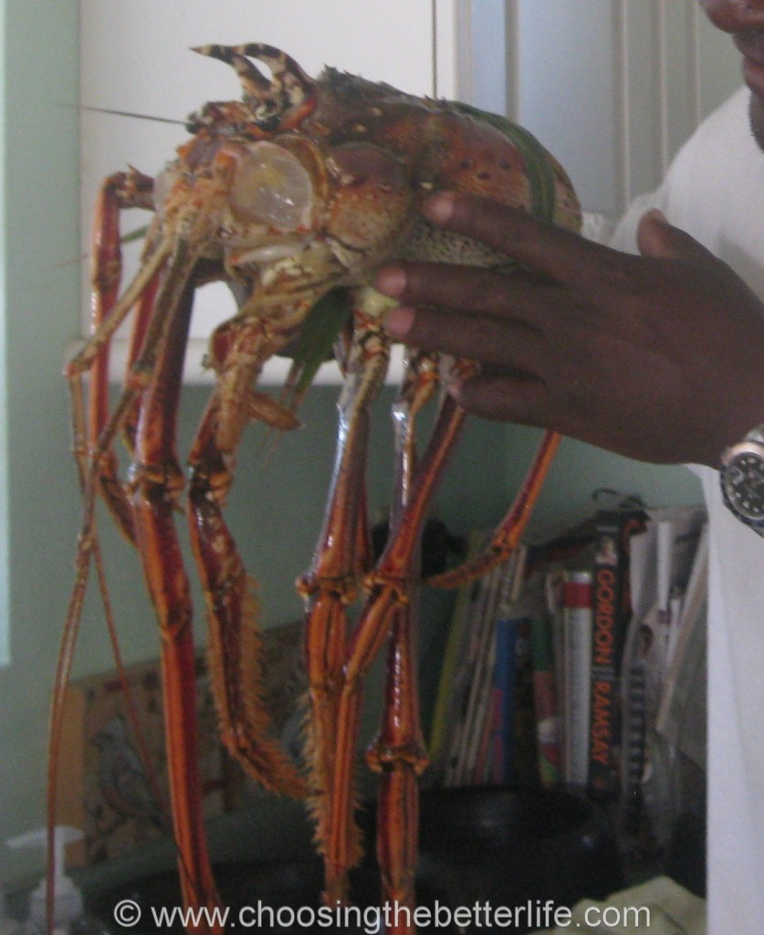 Giant lobster head - fresh from the sea.