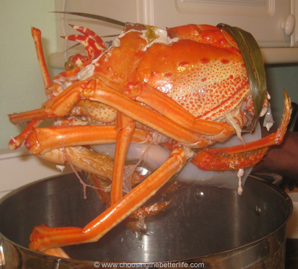 Truly giant lobster head!